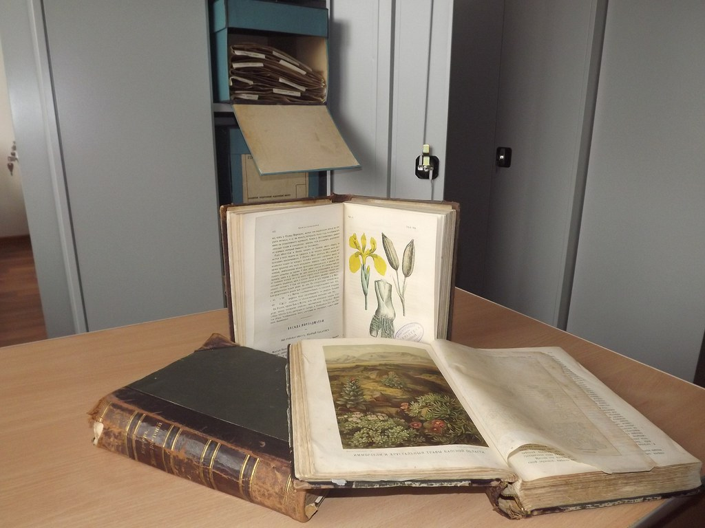 образец гербария фото