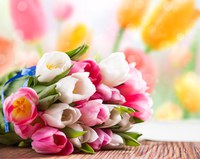 2019Nature___Flowers_Beautiful_bouquet_of_pink_and_white_tulips_on_the_table_131814_
