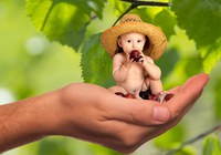 vitamins_fruit_nutrition_child_baby_responsibility_healthy_cute-1198163